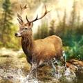 猎鹿冲突游戏安卓版