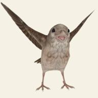 救救那小鸟最新版